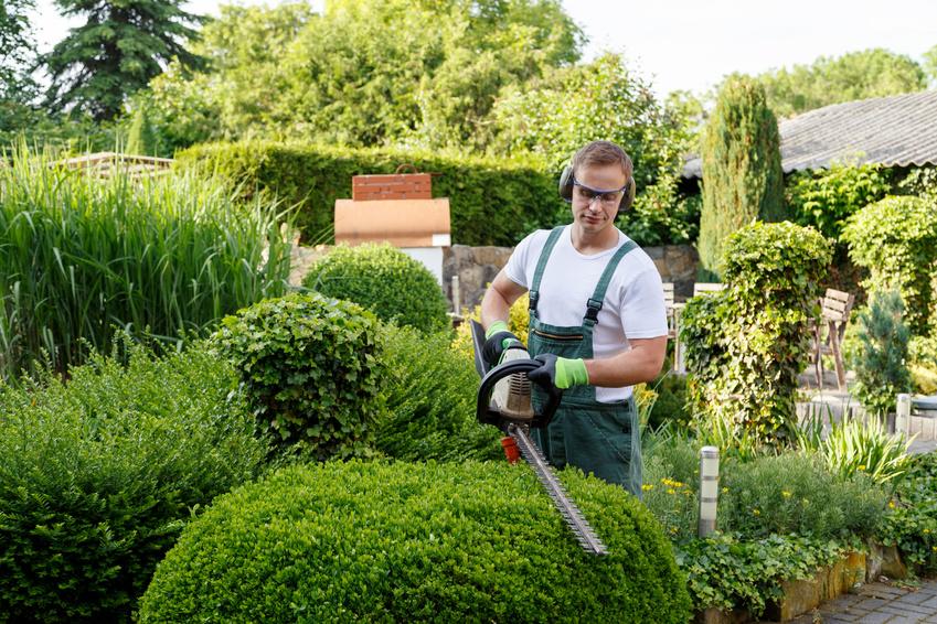 Entretien de jardin : quel matériel pour effectuer la taille des haies ?