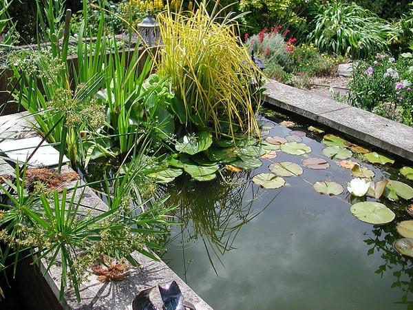 Quel intérêt d'avoir un bassin de jardin chez soi ?